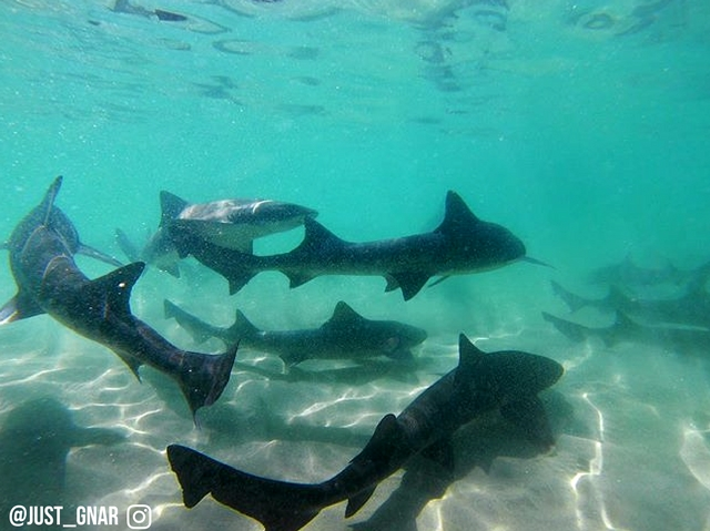 leopard shark snorkel tour La Jolla Shores San Diego
